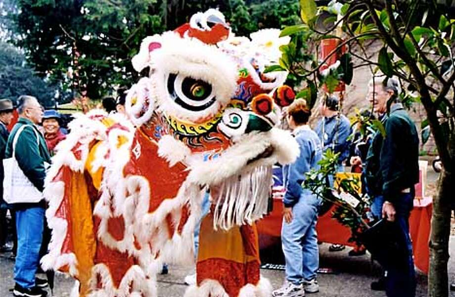 Chinese Lion dancers at Stybring Arboretum and botanical Gardens Feb. 9 2002.