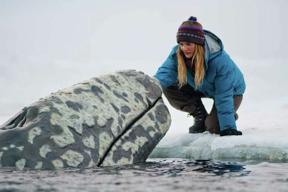 """In this image released by Universal Pictures, Drew Barrymore is shown in a scene from """"Big Miracle,"""" a film about the rescue of a family of gray whales trapped by rapidly forming ice in the Arctic Circle. The film, which stars Barrymore and Ted Danson opens Feb. 3. Photo: AP"""