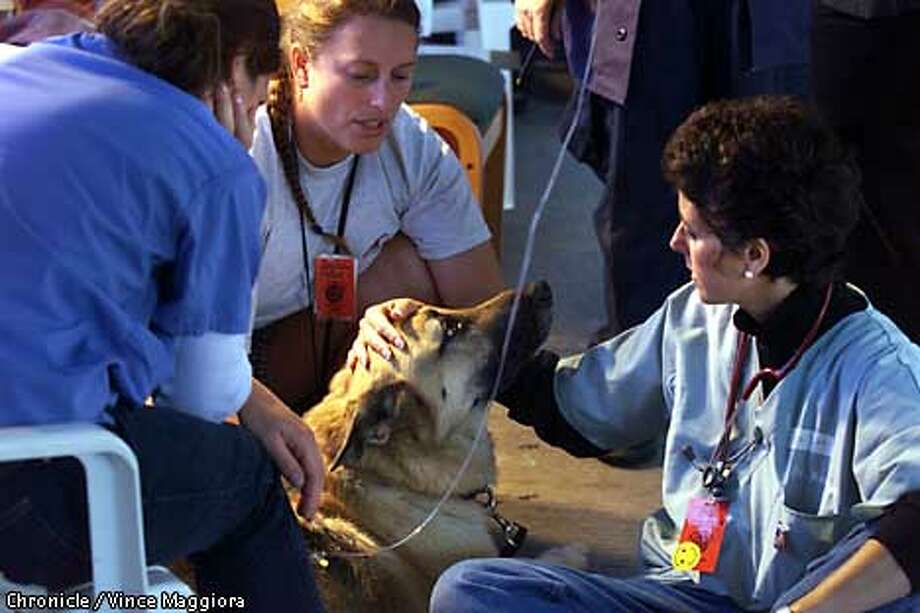 L TO R Dr. Danielle Dalton, Merlin Durhman firefighter owner of Kermit a Bomb,Arson and search dog and Dr. Kim Rosenthal checking Kermit, Inside the VMAT mash tent where they treat search dogs, Days after the terrorist attack on the World Trade Center in New York  BY Vince Maggiora Photo: VINCE MAGGIORA