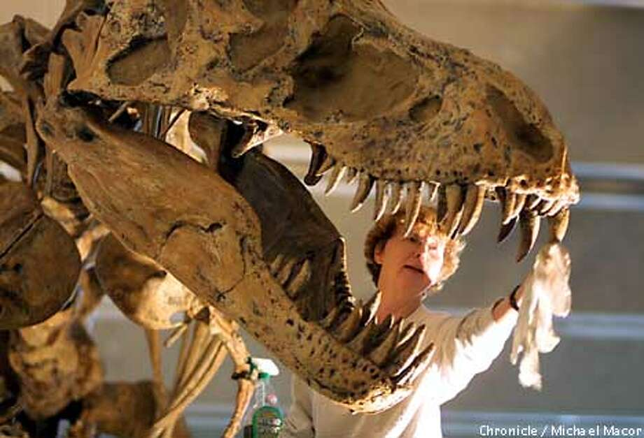"Museum Docent Roberta Borgonova cleans soot from the teeth of the lobby's center attraction, a T-Rex dinousaur. A little ""Simple Green"" cleaner safely cleans the animals bones.The California Academy of Sciences in Golden Gate gets set to reopen soon following a fire in the lobby of the building. by Michael Macor/The Chronicle Photo: MICHAEL MACOR"