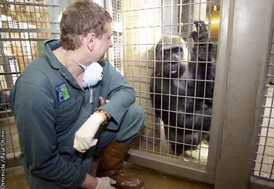 Cancer patient Todd Regan got to spend the day behind the scenes in the gorilla enclosure at the SF Zoo. Regan interacts with Bwang after her morning feeding.  PAUL CHINN/S.F. CHRONICLE Photo: PAUL CHINN
