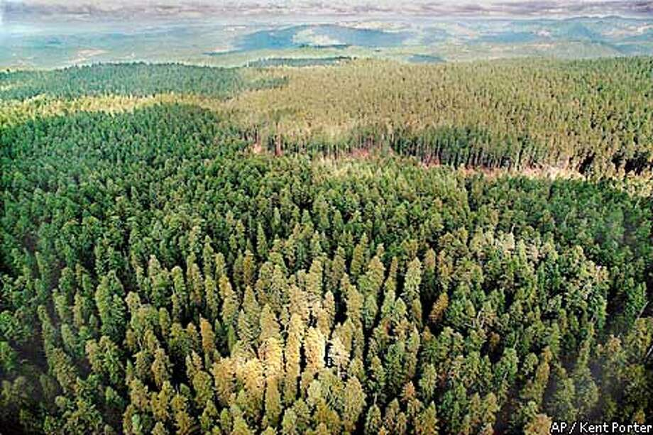 This is a view of a portion of the controversial Headwaters Forest looking northwest near Carlotta, Calif. in Humboldt County, Thursday, Sept. 5, 1996. At middle right is the only driveable road into the forest. At 3,000 acres, the old growth virgin redwood grove, owned by Charles Hurwitz, is one of the largest in private ownership. The Clinton administration and environmentalists are trying to negotiate a swap to stop Pacific Lumber from salvage logging starting Monday Sept. 16. (AP Photo/Santa Rosa Press Democrat, Kent Porter) Photo: KENT PORTER