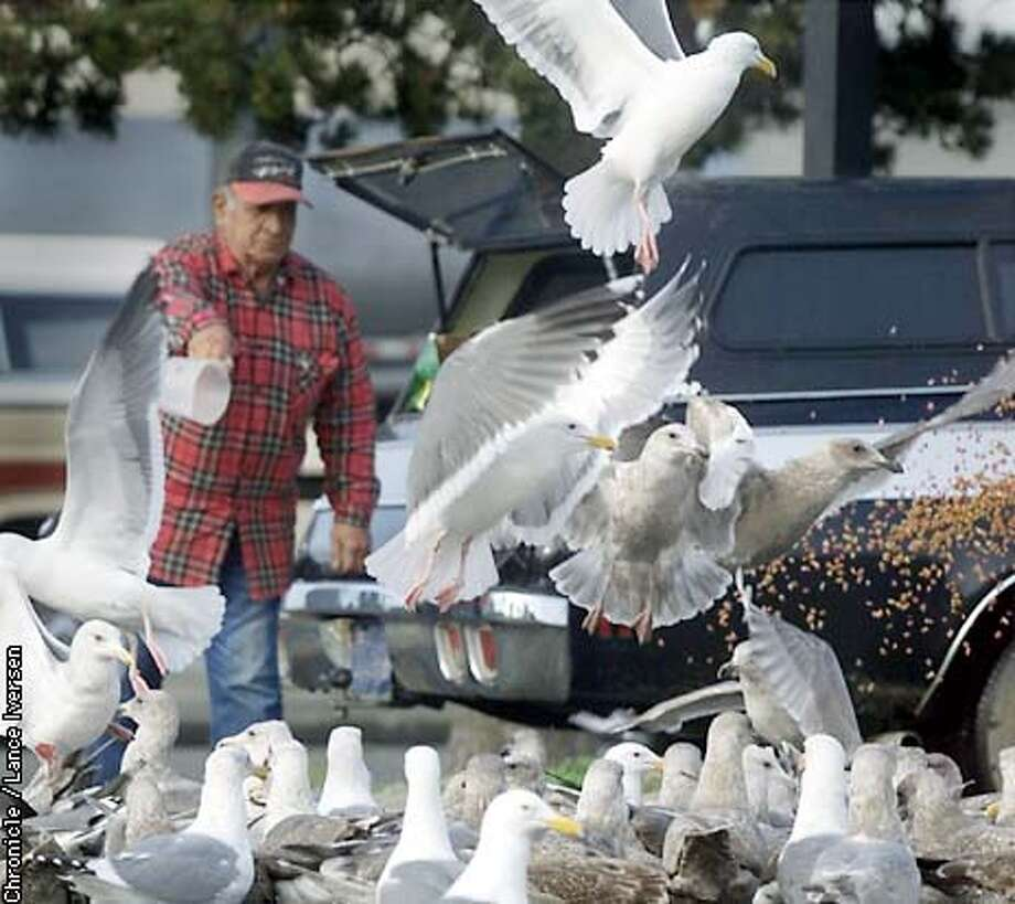 "Manuel Garcia, tosses dry cat food to the sea gulls daily at his home town of Crescent City. Garcia says "" Everything has a purpose in life, the gulls keep our beaches clean. They just need a little help in the winter once the tourist leave "" BY LANCE IVERSEN/SAN FRANCISCO CHRONICLE Photo: LANCE IVERSEN"