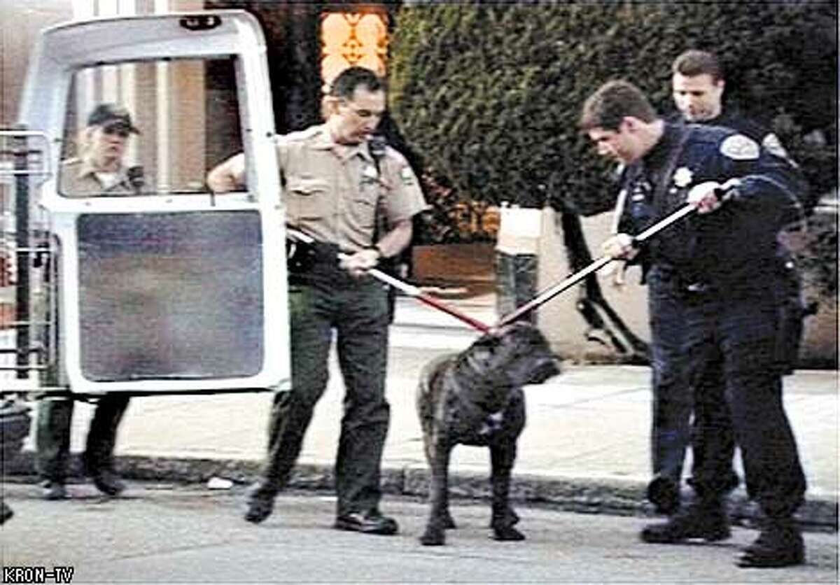 DOG-c-27JAN01-SZ-KRON ---- One of the dogs that killed Diane Whipple outside the door to her apartment at Pacific and Fillmore. This is a grab from video provided by TV station KRON. Our agreement with them is that they must be credited whenever this picture is published. PHOTO / KRON-TV