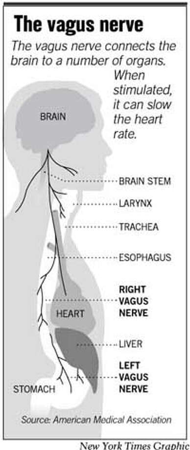The Vagus Nerve. New York Times Graphic