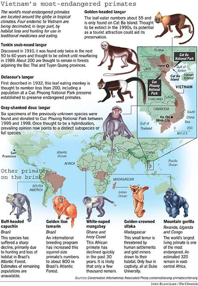 Vietnam's Most Endangered Primates. Chronicle graphic by John Blanchard