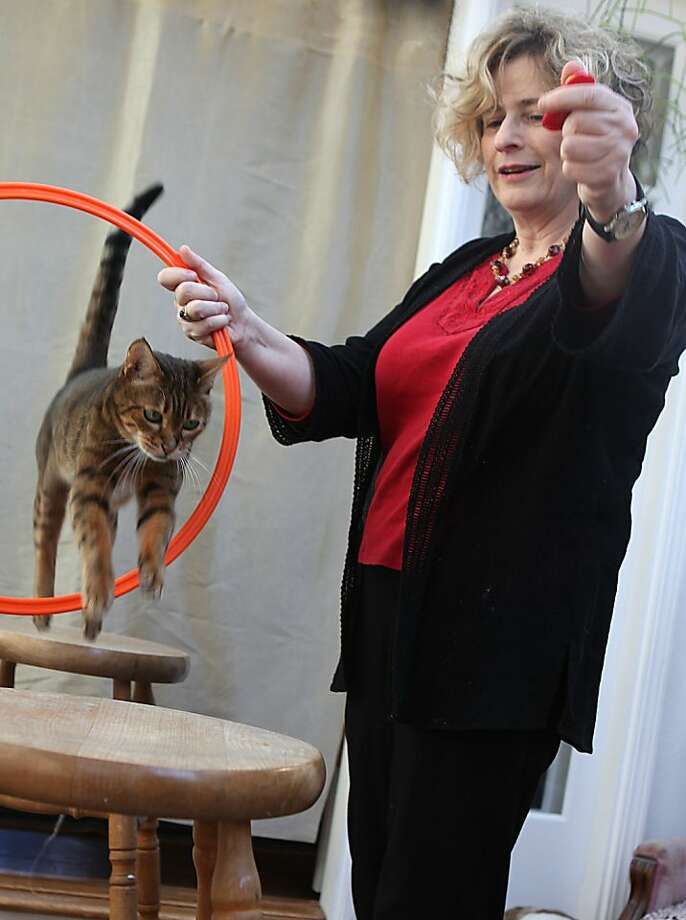 Certified cat behavior consultant Marilyn Krieger teaching Maulee, an 18 and a half year old Bengal, with her clicker at home in Redwood City, Calif., on Wednesday, January 11, 2012. Photo: Liz Hafalia, The Chronicle