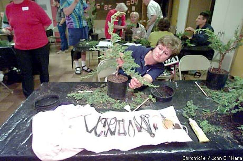 "Faith Lutheran CHurch, San Rafael,CA  ""Everything you ever wanted to know about bonsai'.  Instructor, TIm Kong, President of the San Francisco Bonsai Society.  ""Linda Newman of Mill Valley, shapes the limbs of her creation.  Photo/John O'Hara Photo: John O'Hara"
