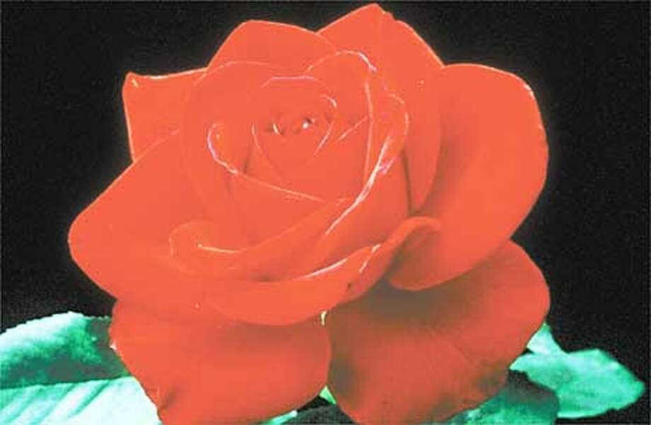 REDROSE/C/14DEC99/BU/RICH BAER SPEC TO THE CHRON  OLYMPIAD ROSE FROM AMERICAN ROSE SOCIETY