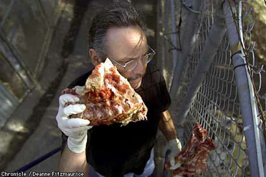 Psychology professor Stephen Glickman threw meat over the fence to the hyenas held captive in the Berkeley Hills. Chronicle Photo by Deanne Fitzmaurice
