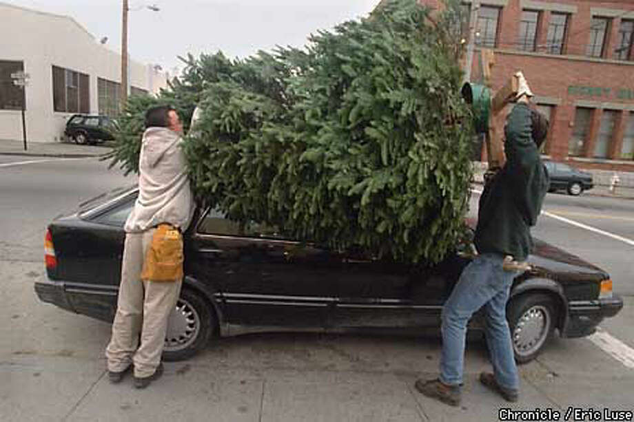 Delancey Street Christmas Trees.Pick Of The Lot Early Birds Snag Biggest Trees At Delancey