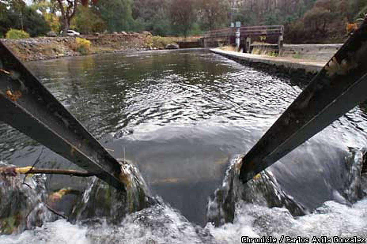 Water rushed through Coleman Canal, interrupting the natural migration of salmon. The canal will be removed. Chronicle Photo by Carlos Avila Gonzalez
