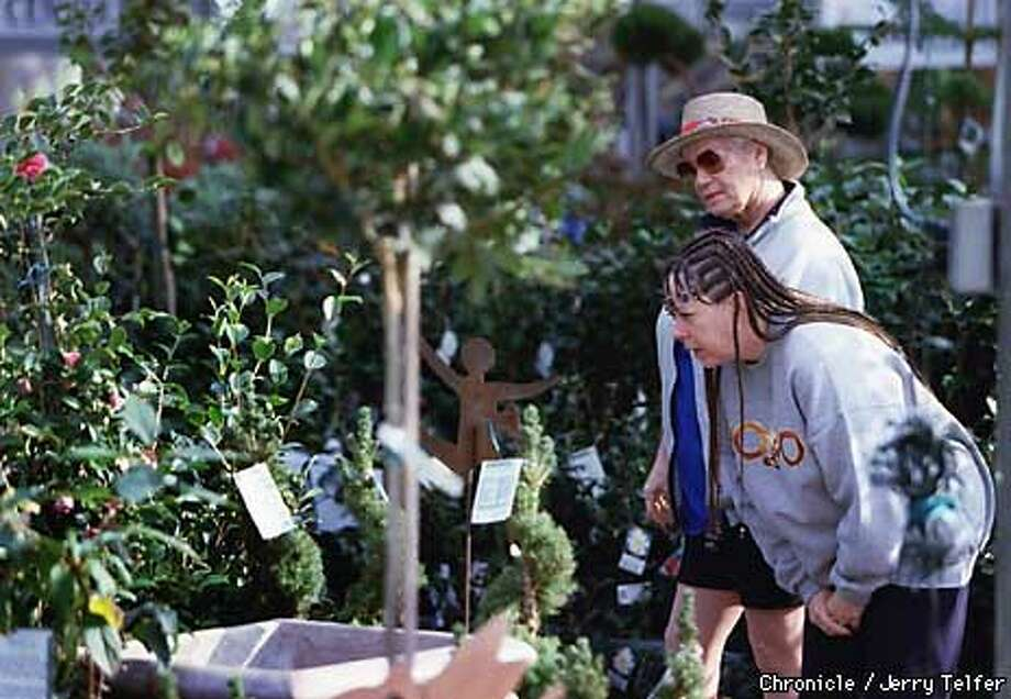 Dottle Smith With Hat And Dolly Jett Examine Camellias At Yamagami Nursery In Cupertino