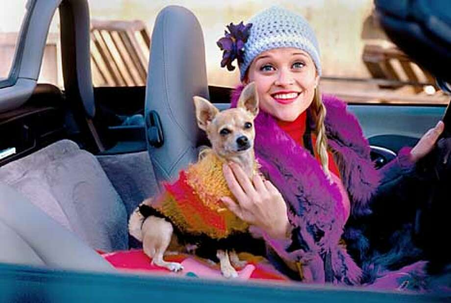 "L-53	REESE WITHERSPOON (right) and ""BRUISER"" the chihuahua star in Metro-Goldwyn-Mayer Pictures� comedy LEGALLY BLONDE. Photo by: Tracy Bennett"