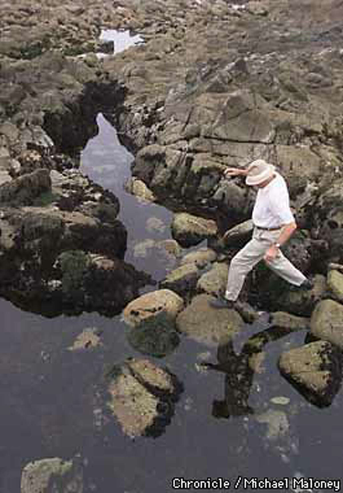 Only a few blocks from his home, Jim Willoughby walked by the Point Pinos tide pools, whose ecosystem, he says, should be better protected under current environmental laws. Chronicle Photo by Michael Maloney