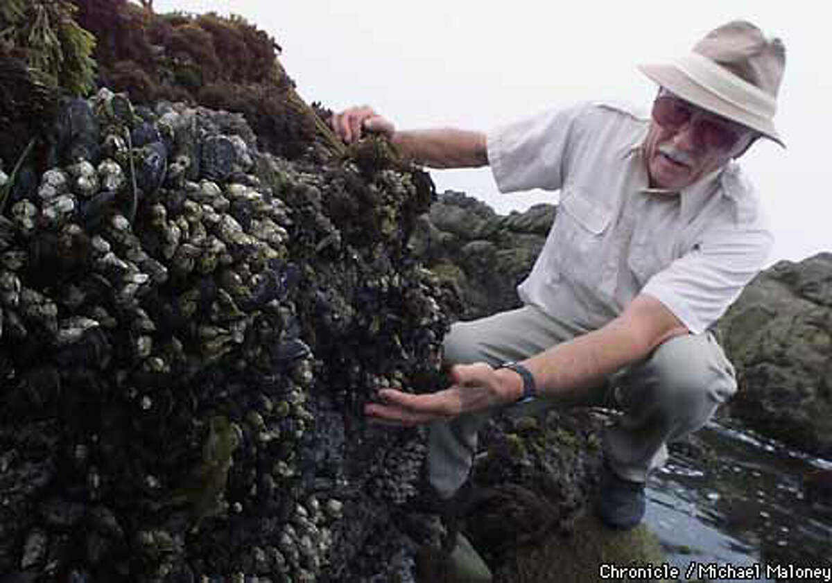 Jim Willoughby began his campaign to keep human predators from destroying the tide pools in Pacific Grove about a year ago. Chronicle Photo by Michael Maloney