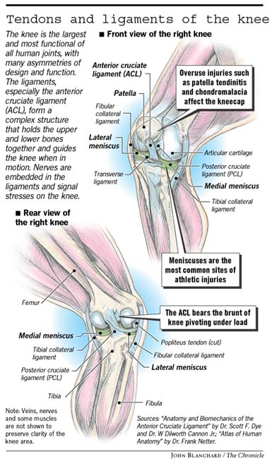 Know thy knees / They can take a lot of strain but need their rest ...
