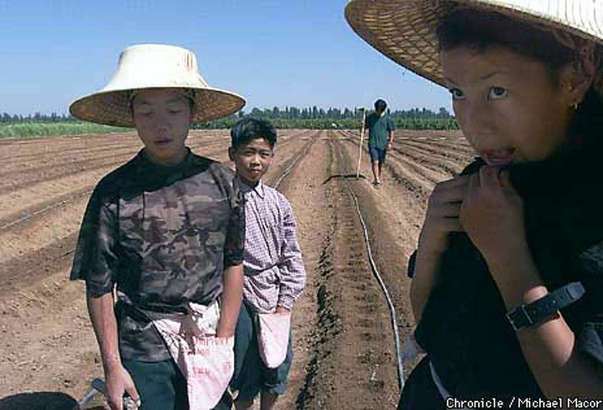Three young Hmong (from left), Tang Yee, 12, Ko Vang, 12, and Keang Yee, 14, took a break from planting beans in a field east of downtown Fresno. Chronicle Photo by Michael Macor