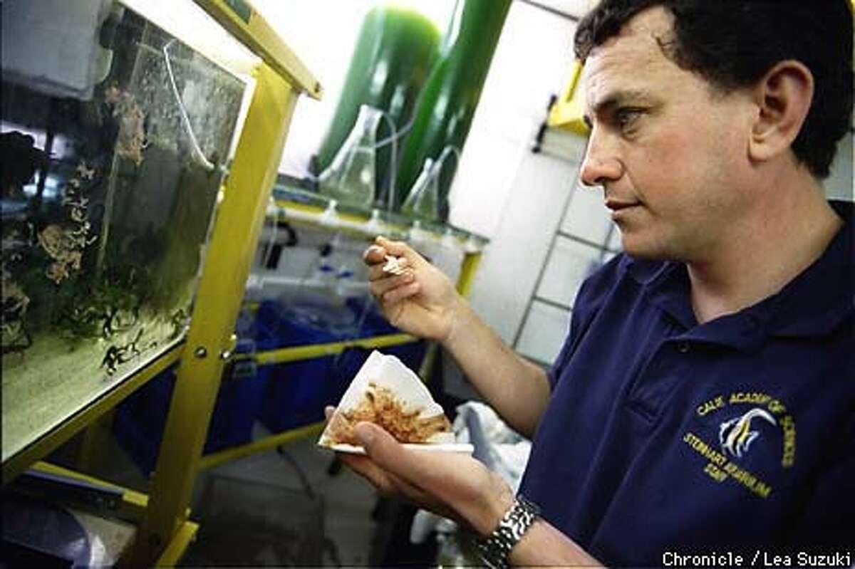 Aquatic biologist Jorge Gomezjurado fed juvenile sea horses in his lab. Chronicle Photo by Lea Suzuki