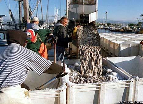 как японцы ловят кальмара