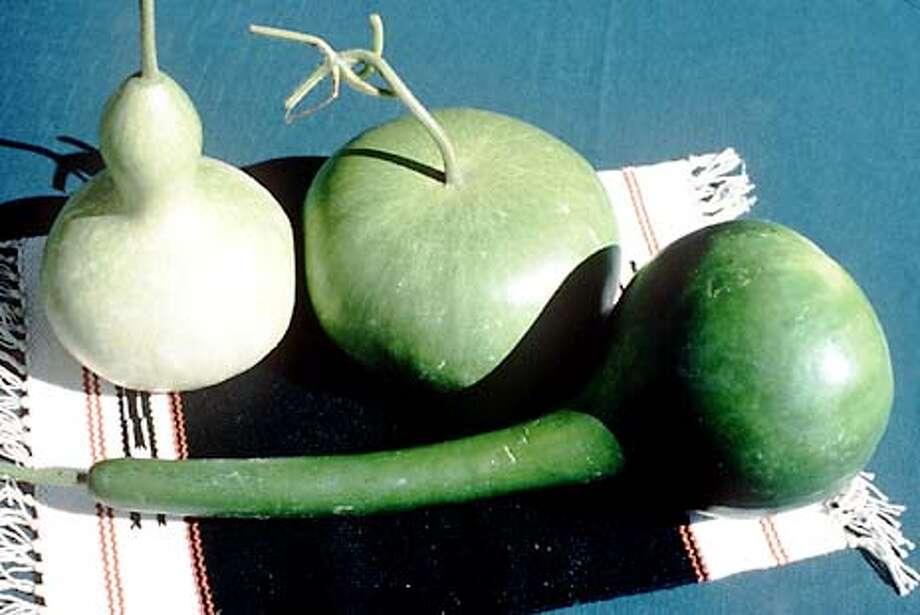 Gourds from Renee's Garden. Photo courtesy of Renee's Garden