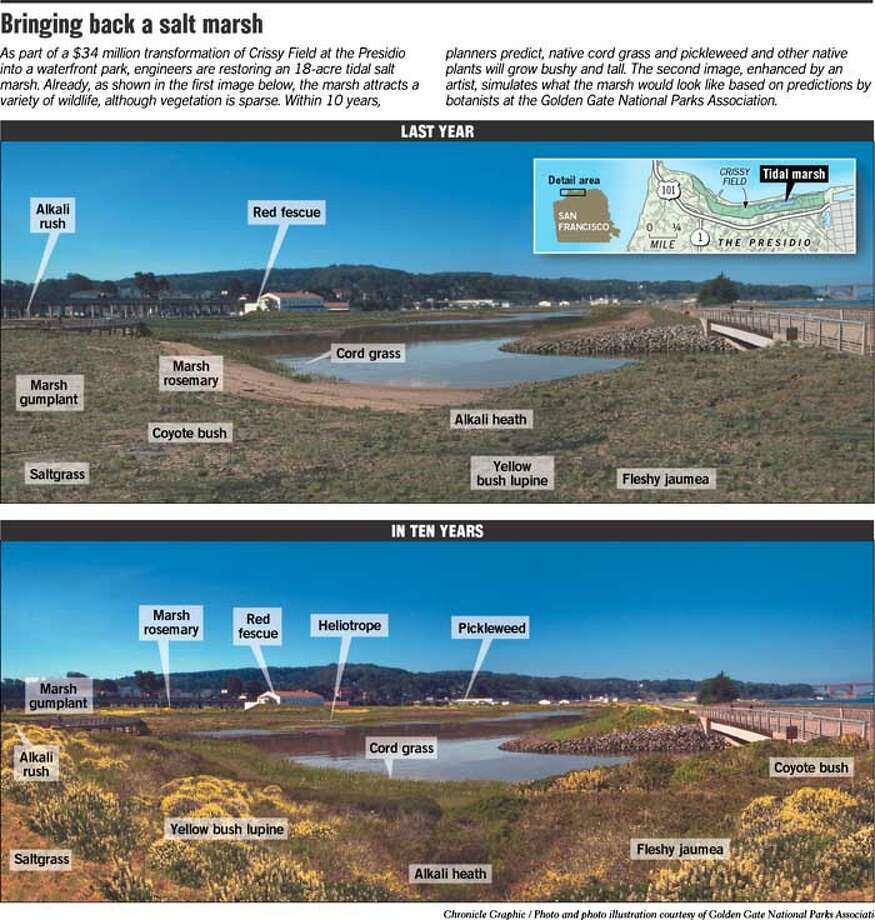 Bringing Back a Salt Marsh. Photo and photo illustration courtesy of Golden Gate National Parks Association. Chronicle Graphic
