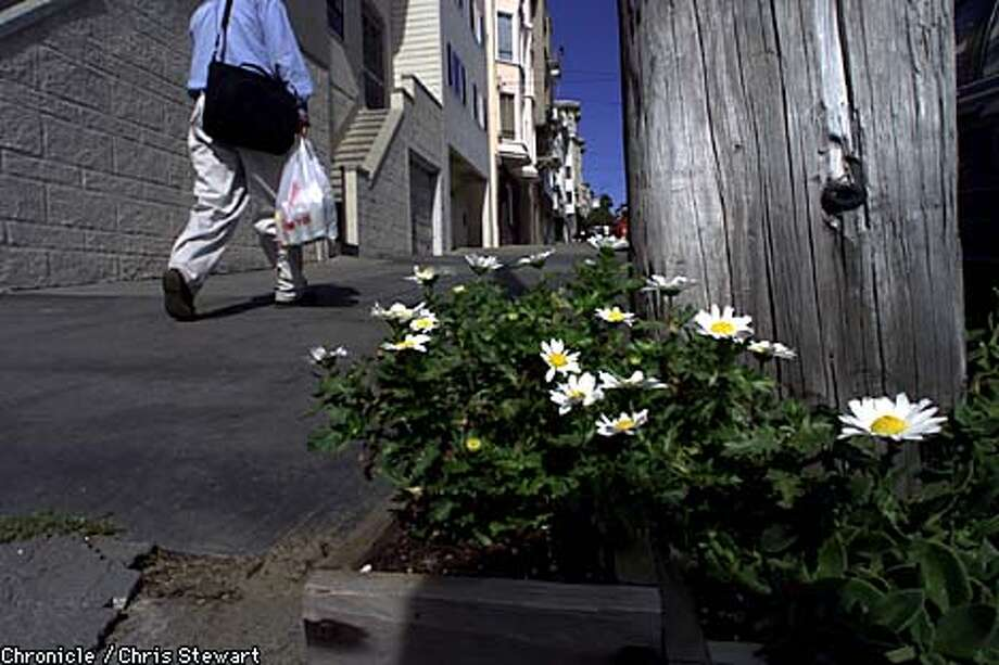 Flowers grow near the spot where Shayne Worcester was robbed and shot. Chronicle photo by Chris Stewart