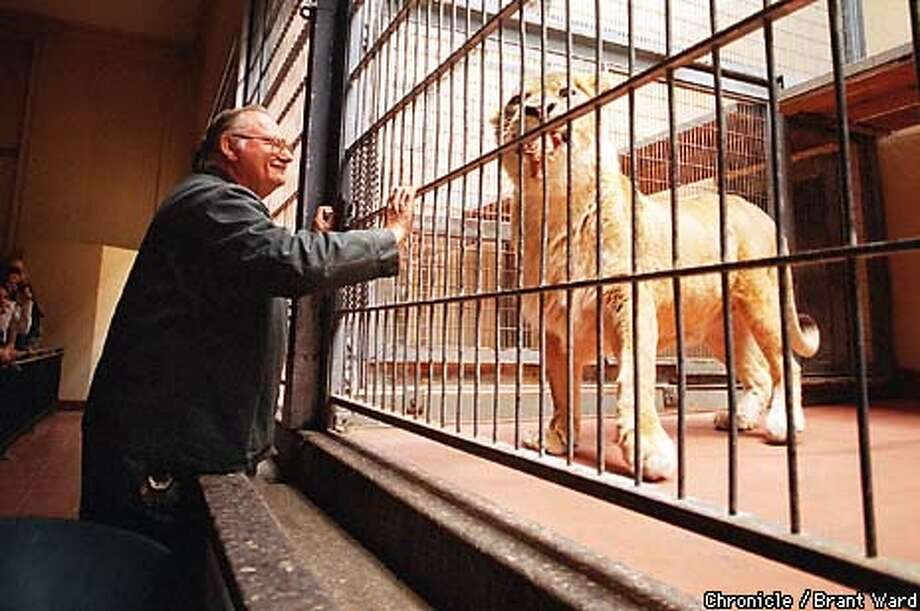 LIONS1/25MAY99/MN/BW--Veteran lion and tiger keeper Jack Castor smiled after his favorite old lion Sandy took a piece of meat from him in the Lion House. She is 19 now and the last of the cats that Jack raised. By Brant Ward/Chronicle Photo: BRANT WARD