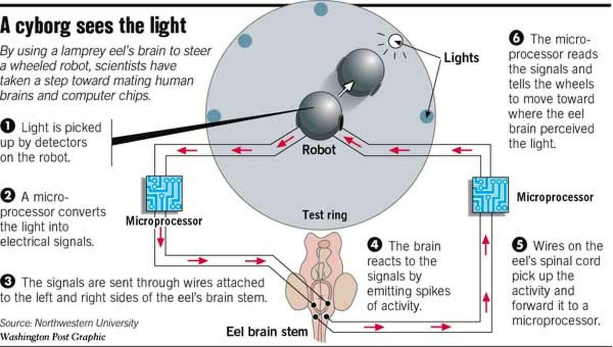 A Cyborg Sees the Light. Washington Post Graphic