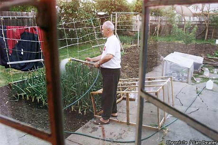 Xhafer Nushi, 65, tends to the garden at the home of his daughter Diana Berishi and son Enver Nushi in Concord. Xhafer and his wife are refugees from Kosovar who came to the US 6-months ago to see their children. They stayed because of the war in Kosovar. The garden keeps Nushi busy and his mind off worrying about his homeland. (CHRONICLE PHOTO SAM DEANER) Photo: SAM DEANERQ