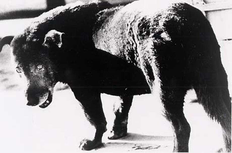 """""""Stray Dog, Misawa, Aomori"""" 1971 gelatin silver print by Daido Moriyama  HANDOUT Photo: HANDOUT"""