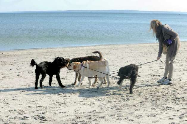 Maya Armanini, of Greenwich,  plays with a friend's dogs at Greenwich Point on a warm winter afternoon Wednesday, Feb. 1, 2012. Photo: Helen Neafsey / Greenwich Time