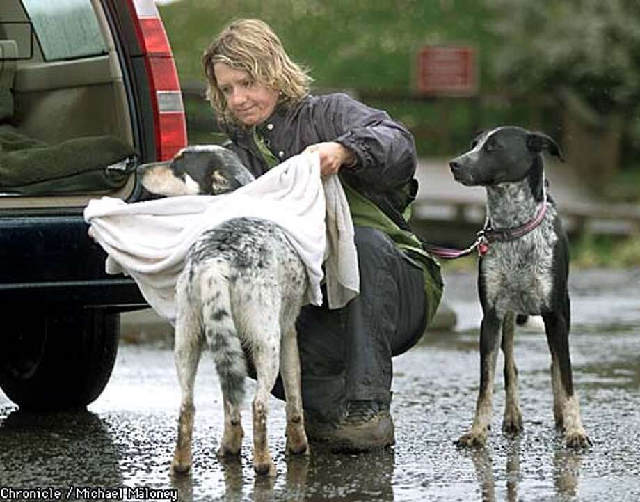 Mary Gavin of San Mateo, who walks her dogs unleashed every day at Fort Funston, wiped mud from Ajax as her other dog, Haley, waited. Chronicle photo by Michael Maloney