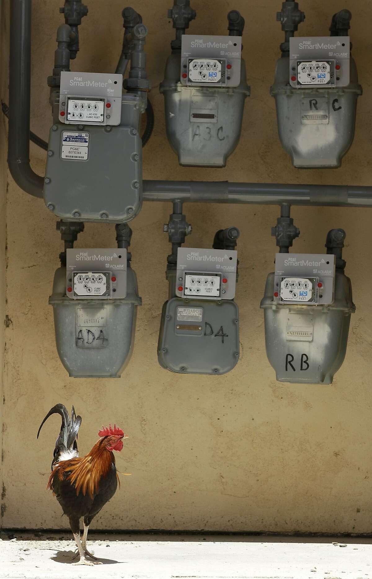 PG&E SmartMeters