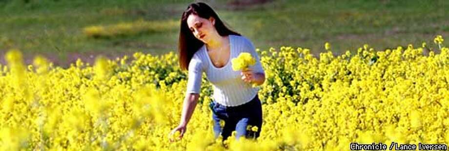 Natalie Morales of Antioch gathered mustard flowers near Clayton. Chronicle Photo by Lance Iverson