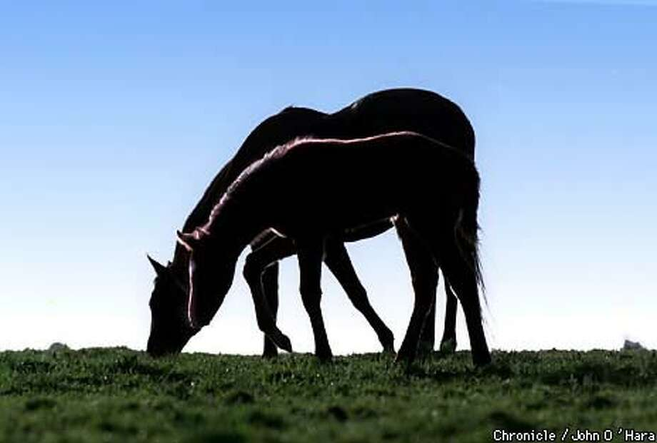 Above, the rising sun outlines a filly grazing next to her dam at Pegasus Ranch, a thoroughbred breeding farm in Petaluma. Chronicle Photo by John O'Hara