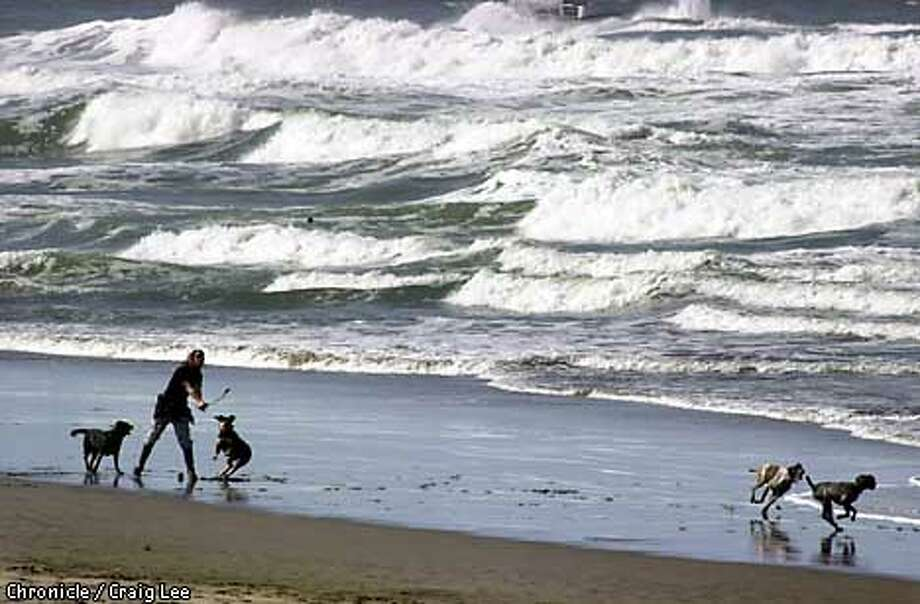 People out at Ocean Beach with surf advisory of large wave sightings. This person, playing with her dogs, did not want to give her name out. She had seven dogs. Photo by Craig Lee/san Francisco Chronicle Photo: CRAIG LEE