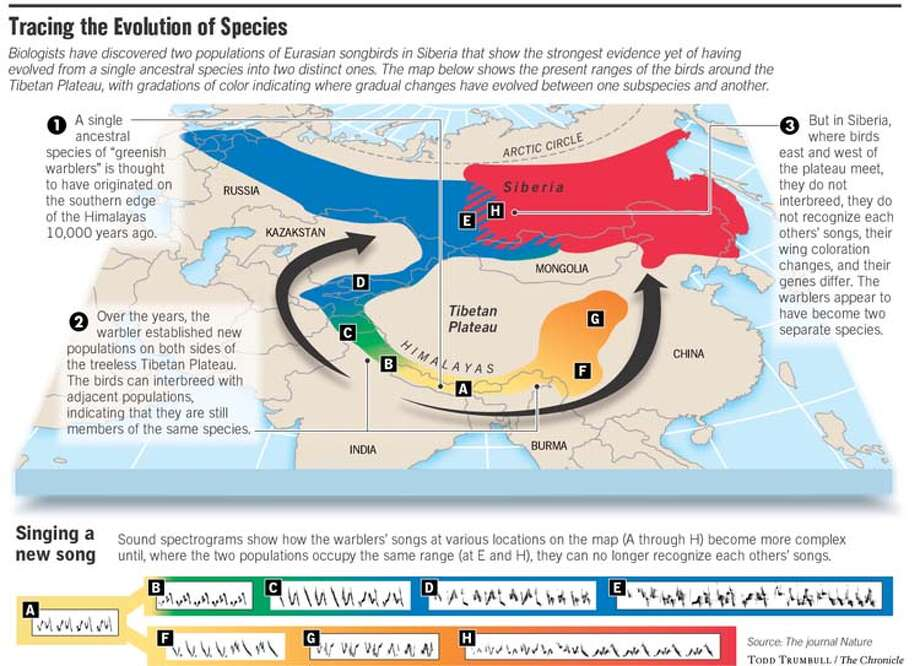 Evolving before our eyes songbirds and salamanders bolster tracing the evolution of species chronicle graphic by todd trumbull ccuart Images