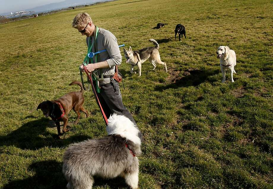 Jon Lovette walked his dogs on Crissy Field, the weather has made his job much easier. This month is turning out to be one of the driest on record in the San Francisco Bay Area, which is not good for the water supply, but great for playing outside. Photo: Brant Ward, The Chronicle