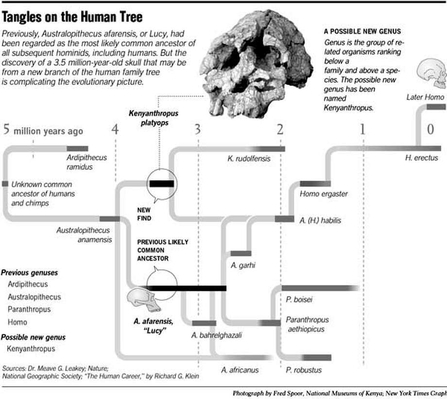 Tangles on the Human Tree. New York Times Graphic