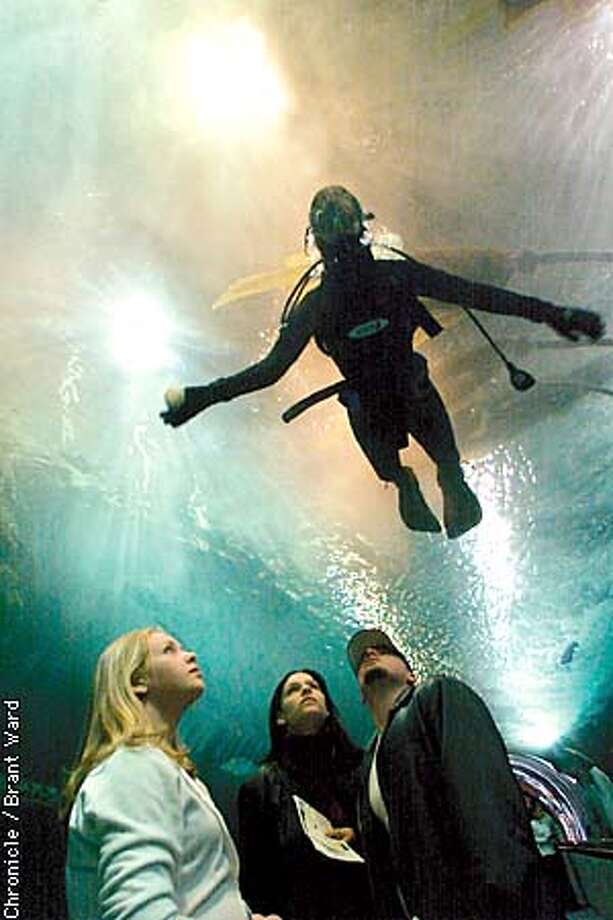 A diver behind an acrylic aquarium wall inside UnderWater World. Chronicle photo by Brant Ward