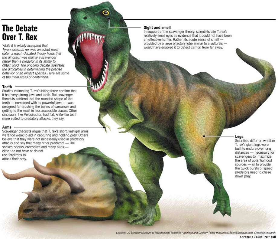The Debate Over T. Rex. Chronicle graphic by Todd Trumbull