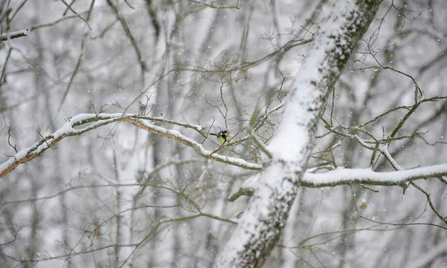 A bird sits on a tree covered by snow in the Northern Spanish Basque village of Izoria, on February 2, 2012.  A cold snap kept Europe in its icy grip, pushing the death toll to 160 as countries from Italy to Ukraine struggled to cope with temperatures that plunged to record lows in some places.  AFP PHOTO / RAFA RIVAS Photo: RAFA RIVAS, AFP/Getty Images / AFP