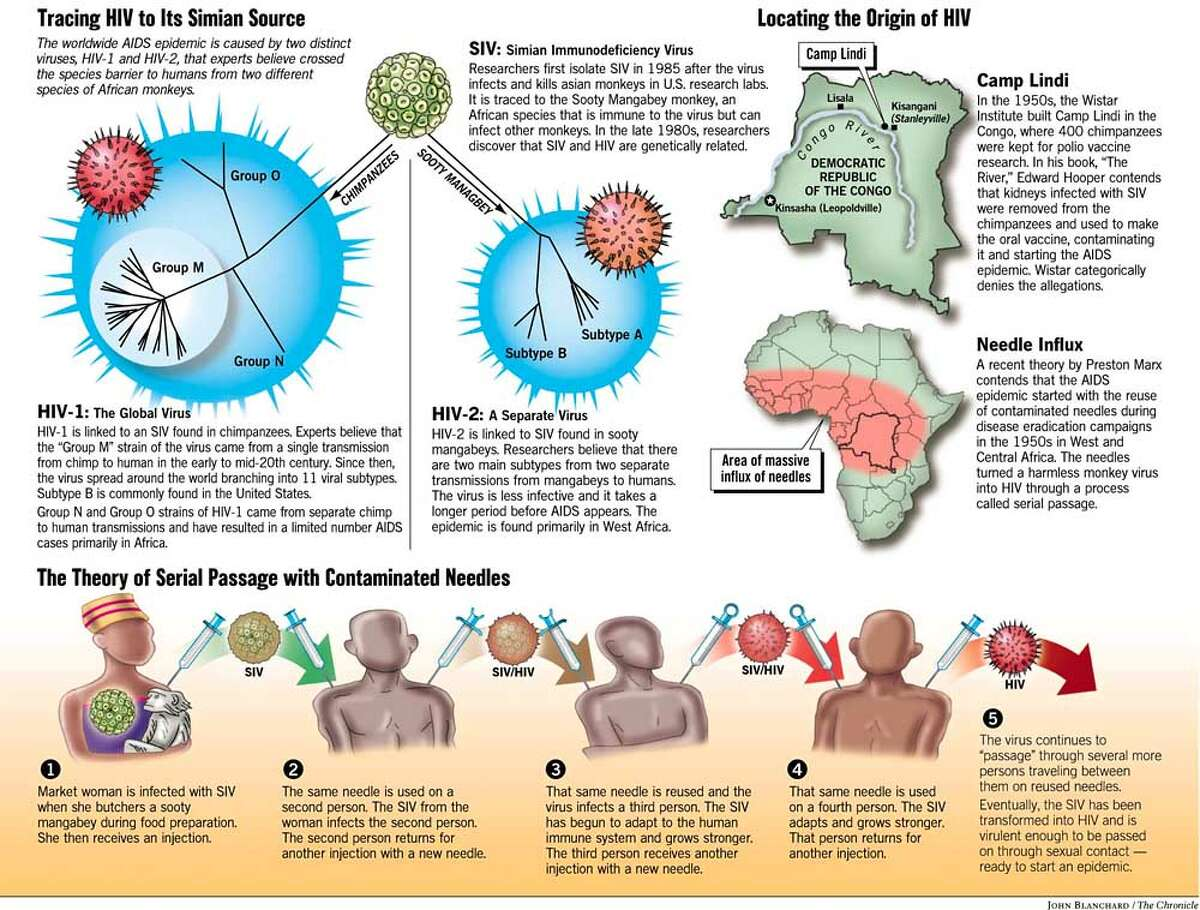 Tracing HIV to its Simian Source. Chronicle graphic by John Blanchard