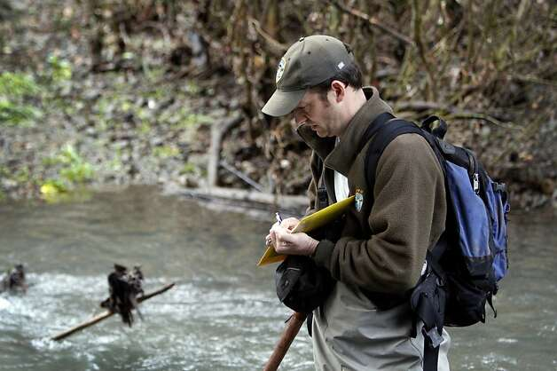 Eric Ettlinger, an aquatic ecologist with the Marin Municipal Water District, wades in the Lagunitas Creek Thursday morning to do the yearly coho salmon count in Lagunitas, Calif., Thursday, January 26, 2012.  Ettlinger says the endangered fish's numbers are finally showing an increase after declining steadliy since 2004. Photo: Sarah Rice, Special To The Chronicle