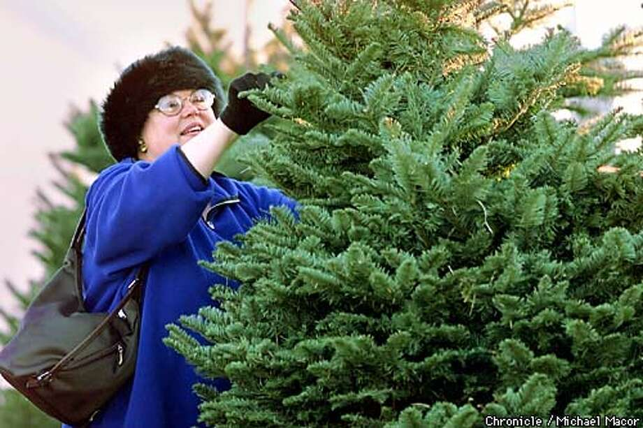 Just two days before Christmas people out shopping for the perfect Christmas Tree. Michele Waxman of El Sobrante found a Douglas Fir in less than 5 minutes. ABC Christmas Trees in Berkeley. by Michael Macor/The Chronicle Photo: MCIAHEL MACOR