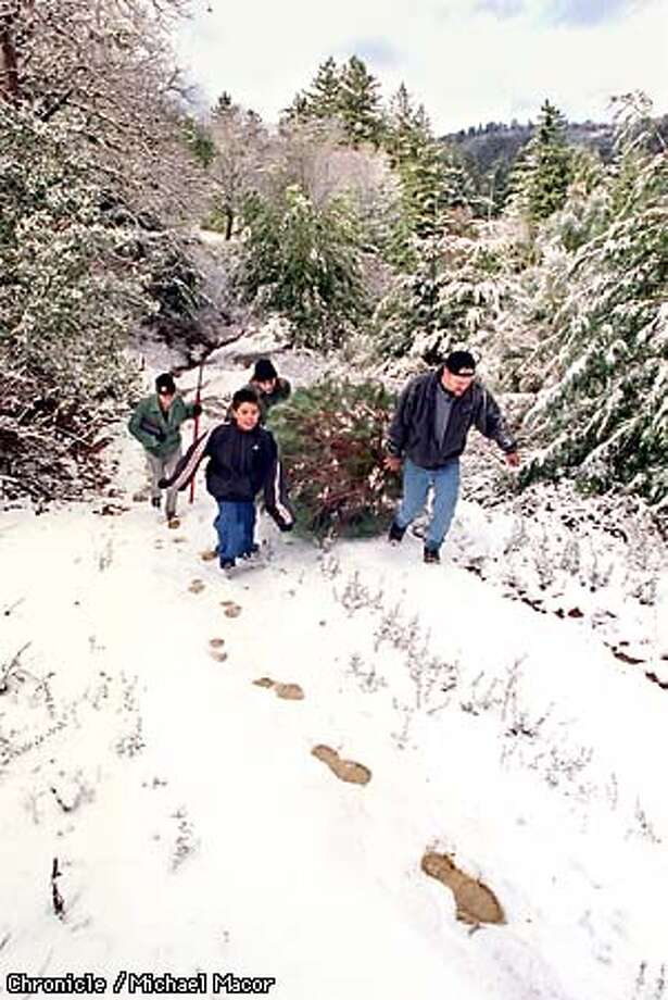 "Snow falls in the Bay Area. ""Allansmith's"" Christmas Tree Farm along Highway 9 above Los Gatos in the Santa Cruz mountains. l to r-Tracie DeLong, Michael Ball 12, Johnny Slone, and Dan DeLong drag their tree up a snow covered road. This site is near the intersection of Highway 9 and Highway 35. By Michael Macor/The Chronicle Photo: MICHAEL MACOR"