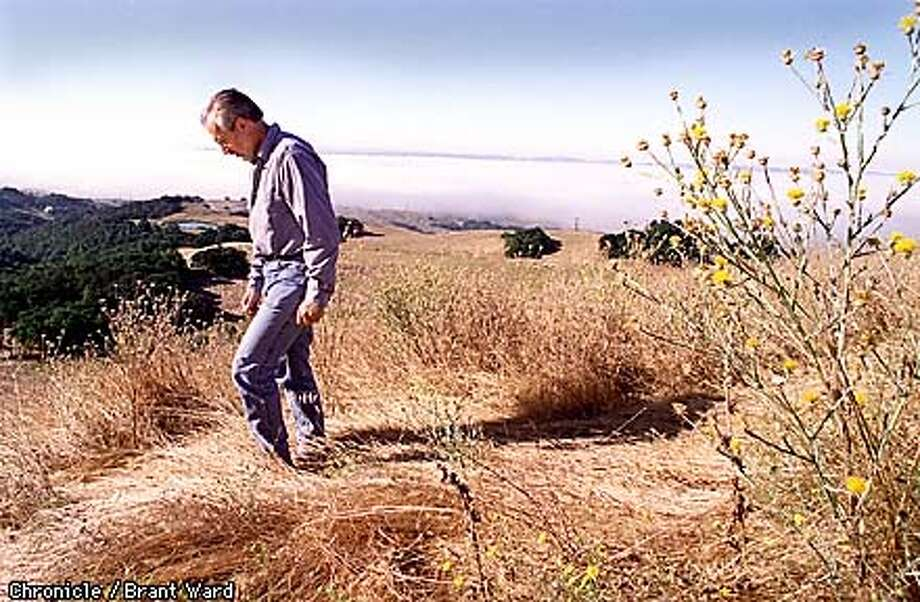 New Petaluma City Manager Frederick C. Stouder slogged his way through the weeds on a hill on Lafferty Ranch. For years the city has been trying to decide what to do with the property. Now some of that responsability has fallen on Stouder's shoulders. By Brant Ward/Chronicle Photo: BRANT WARD