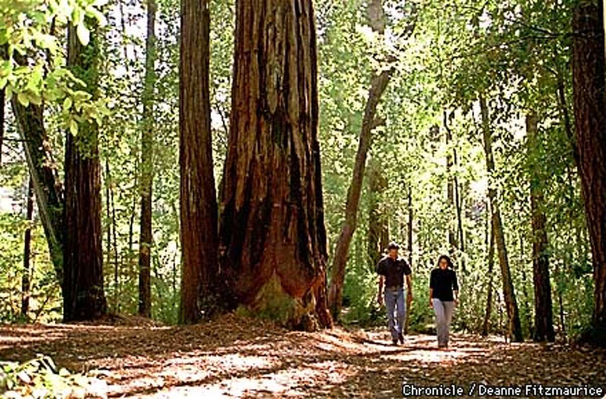 (l to r) Anoop Grewal, Palo Alto and Anoop Kumal, San Jose (note to editor: yes the man and woman have the same first name) walk through the redwood trees in Portola Redwoods State Park. CHRONICLE PHOTO BY DEANNE FITZMAURICE