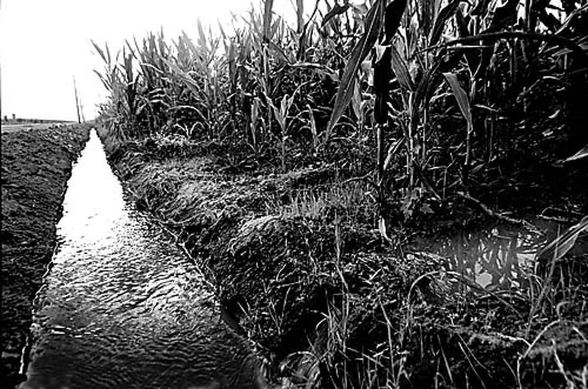 MCFARLAND1/B/28SEP98/SC/SLF=Excess water pours from a saturated cornfield outside of the small farming community of McFarland. BY SUSANNA FROHMAN/THE CHRONICLE